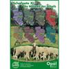 OPAL Schafpate 11 4-ply mezgimo siūlai kojinėms